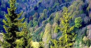 1280px-Orman-forest